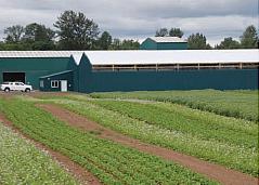 Weaver Seed Farm